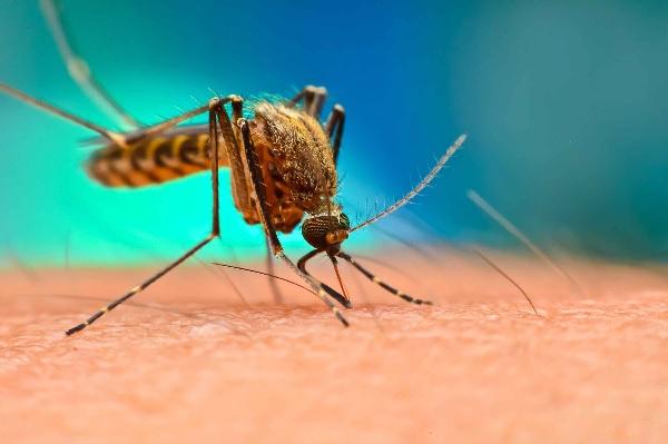 Прогноза: В следващите 5 години ще има скок на смъртността от ХИВ, туберкулоза и малария