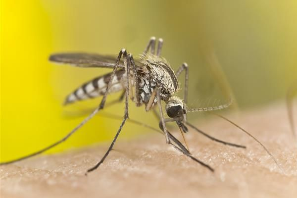 РЗИ-Варна предупреди за риск от малария