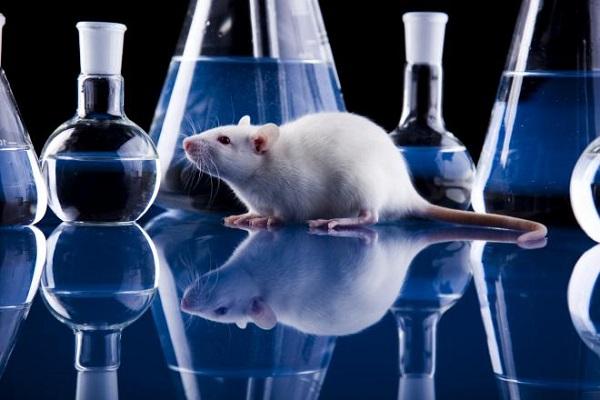 ЕМА призова за по-етично отношение в използването на животни при тестването на нови лекарства