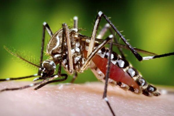 Девет случая на малария са регистрирани в Северна Гърция