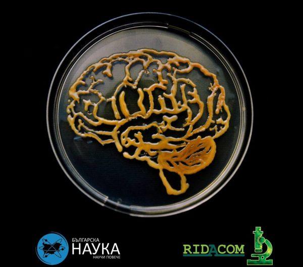 Бъдеща лекарка с награда в престижен конкурс за рисунка с микроорганизми