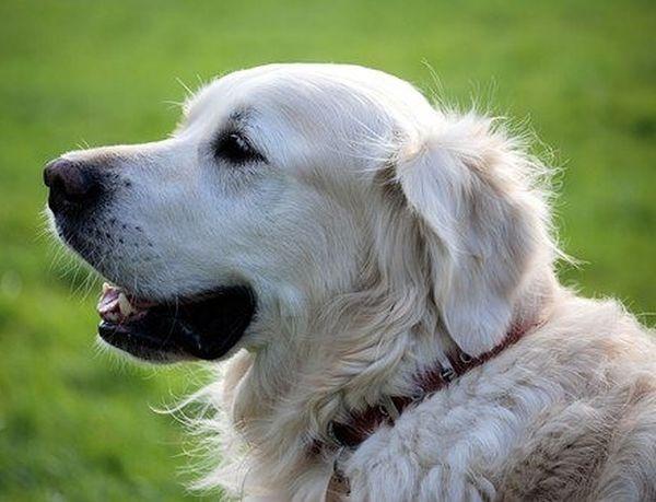 И кучета помагат в битката с COVID-19